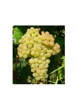 Жидкость для электронных сигарет OMEGA - Moreish 80 мл виноград кишмиш