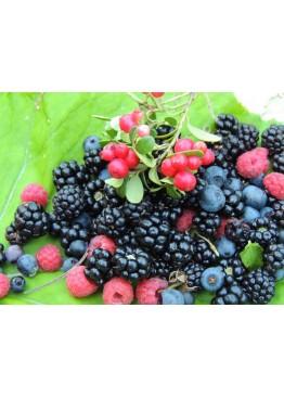 Жидкость Aviator Wild Wind лесные ягоды 30мл