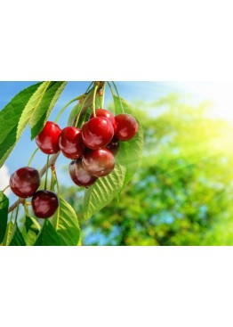Жидкость для электронных сигарет Vape Cola Cherry 0 мг/30 мл