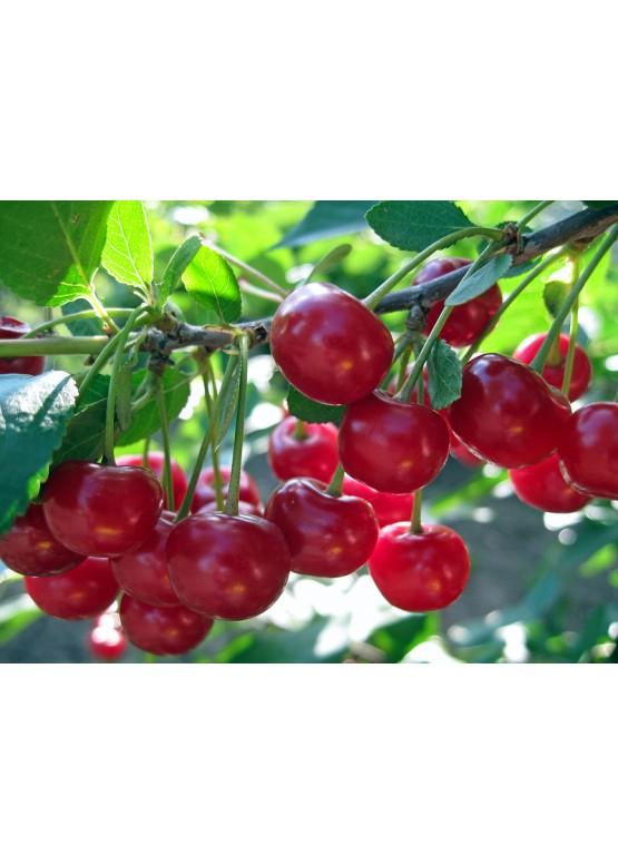Tobacco Cherry жидкость для электронных сигарет 3 мг
